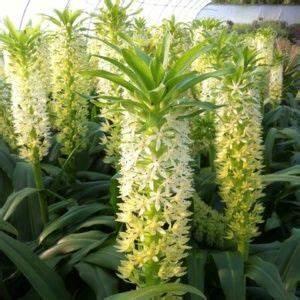 Plantes D Ombre Extérieur : maison retraite champfleuri ~ Melissatoandfro.com Idées de Décoration