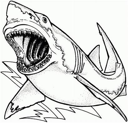 Shark Coloring Awesome