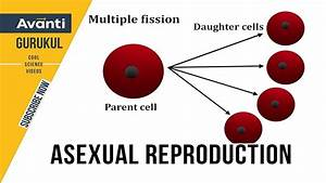 Asexual Reproduction Class 12