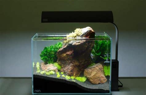 kosten aquarium einrichten aquarium deko selber machen inspirierende ideen und tipps
