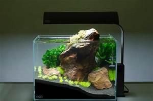 Aquarium Dekorieren Ideen : aquarium deko selber machen inspirierende ideen und tipps ~ Bigdaddyawards.com Haus und Dekorationen