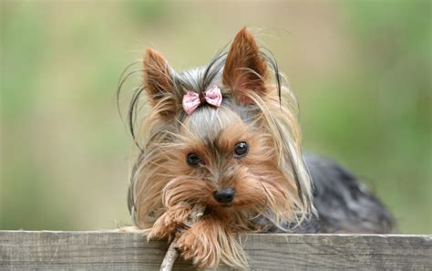 top 10 cutest dog breeds the exeter daily