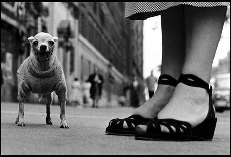 elliott erwitt dog dogs delaware art museum