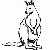 Kangaroo Coloring Clipartmag Printable sketch template