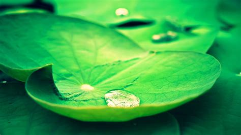 rain  leaves wallpaper hd pixelstalknet