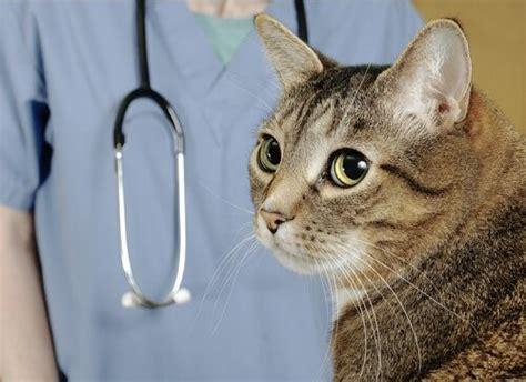 darmparasiten bei katzen behandlung und praevention