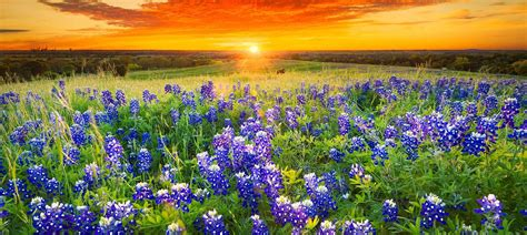 places   spring wildflowers  united states