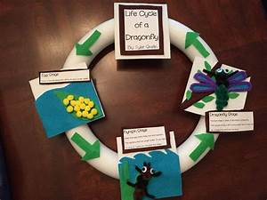 Life Cycle Of A Dragonfly Project