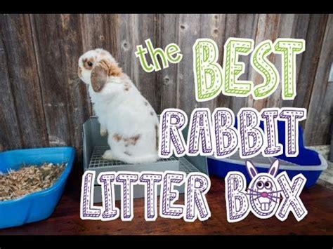 rabbit litter box comparison youtube