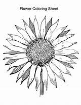 Coloring Sunflower Flower Drawing Flowers Sheet Background Pages Sheets Transparent Pattern Adults Line Svg Floral Bloom Drawn Hand Printable Detailed sketch template