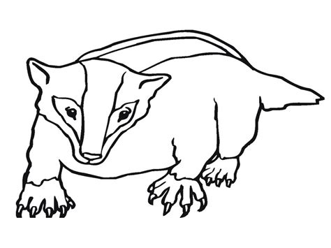 The Honeybadger Html Page Templates by Badger Coloring Pages Realistic Realistic Coloring Pages