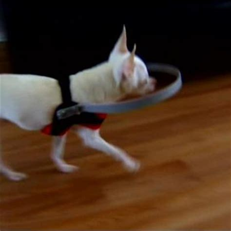 brilliantly simple  tech device   blind dogs