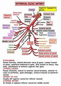 171 Best Images About Us Arteries On Pinterest