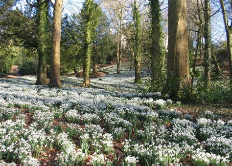 snowdrop gardens four of the best places to see snowdrops in the cotswolds cotswold family holidays
