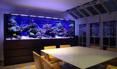 beautiful interiors  spectacular aquariums