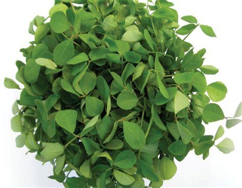 Buy Herb Seeds From Allthatgrows Methi Kasuri Seeds Online