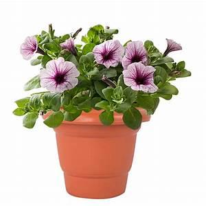 kuber, industries, plastic, plants, , flower, pot, , brown, , set, of, 4, pcs