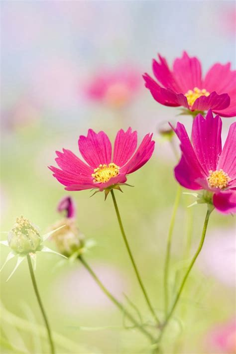flowers hd wallpapers  mobile gallery