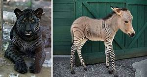 18 Hybrid Animals That Are Hard To Believe Actually Exist ...