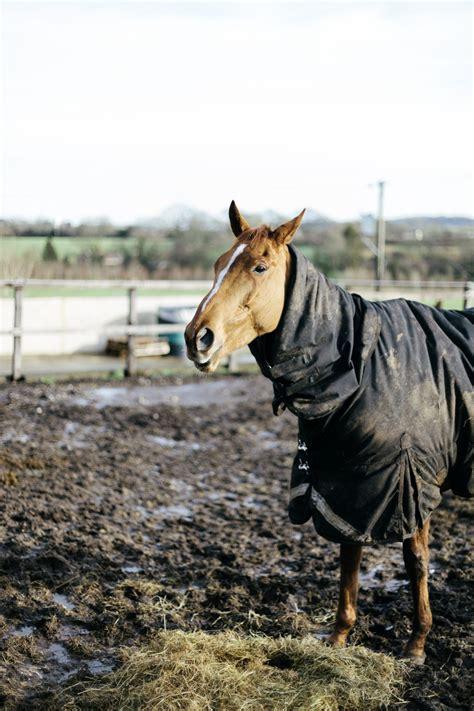 horse blankets waterproof clean turnout usblog nikwax sheet