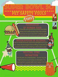 bowl 50 simple tips for pet safety holistic
