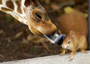 Funny animal pic ~ Funny images and Jokes