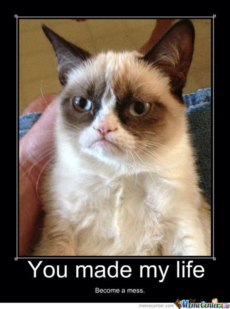 Angry Cat Meme - angry cat by kostia lipskerov meme center