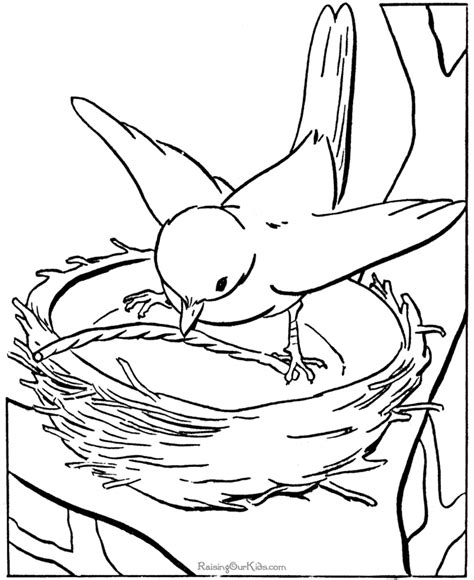 printable kids coloring pages  birds shut