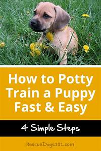 how to potty train a puppy fast easy rescue dogs 101 With potty train your dog fast