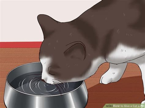 cat clipart water cat water transparent