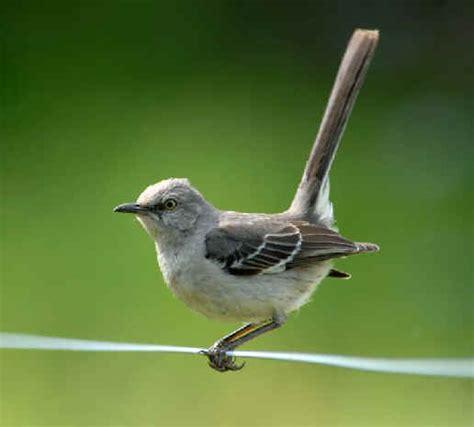 north carolina birds during focus on nature tours