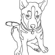 HD wallpapers free coloring pages of dogs to print