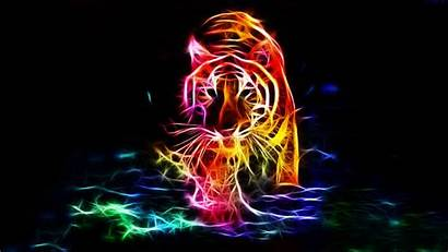 4k Tiger Wallpapers Walking