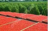 Лечение псориаза льняным семенем