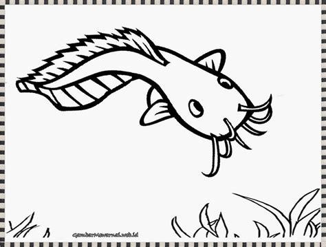 gambar ikan lele untuk diwarnai mewarnai gambar ikan