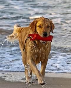 Urlaub Mit Hund Am Meer Italien : urlaub mit hund die besten angebote von ostsee bis italien ~ Kayakingforconservation.com Haus und Dekorationen