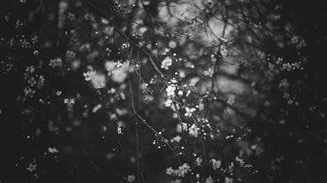flowers tree during nighttime hd black aesthetic