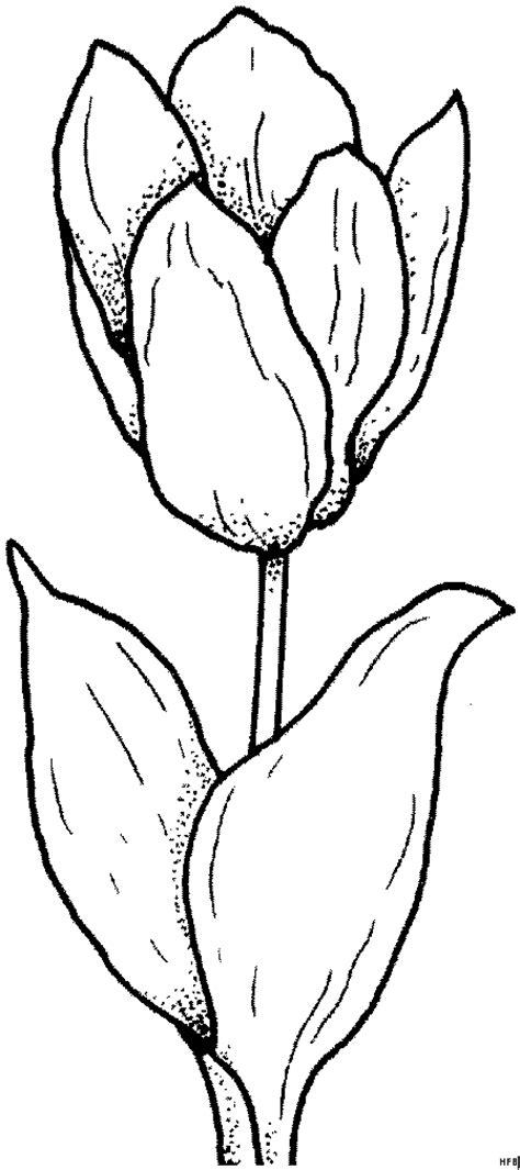einfache schoene tulpe ausmalbild malvorlage blumen