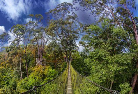 canopy walk visit  borneo