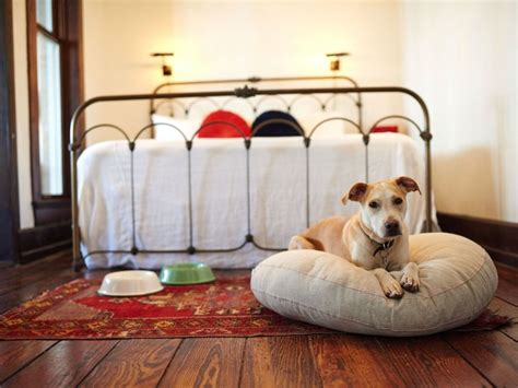 10 Luxurious Texas Hotels That Pamper Pets, Too