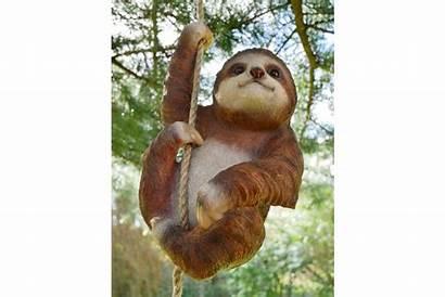 Sloth Climbing Sn
