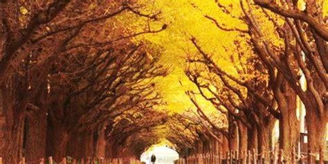 terowongan pohon terindah  dunia