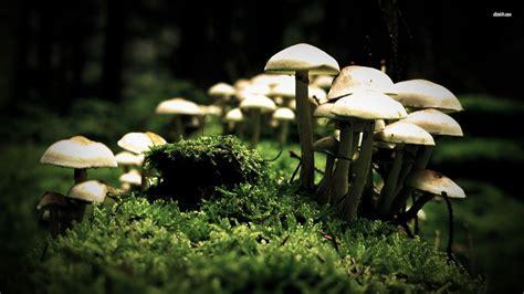 free mushrooms wallpaper nature wallpapers 8289