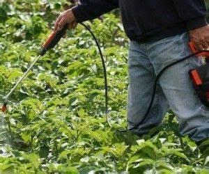 Insecticide Savon Noir Bicarbonate : savon noir les bienfaits de l exfoliant naturel par ~ Dailycaller-alerts.com Idées de Décoration