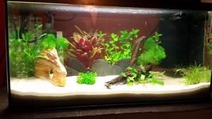 Aquarium Einrichten Beispiele : aquarium einrichten 60l zuhause image idee ~ Frokenaadalensverden.com Haus und Dekorationen