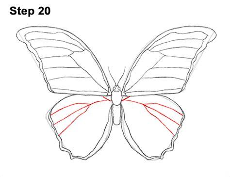 draw  butterfly blue morpho