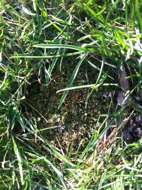 Pilze Im Garten Rasen Vernichten by Unkraut Im Rasen Vernichten Bester Unkrautvernichter F 252 R