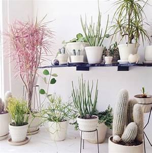 Aloe Vera Ikea : 3 24 ~ Preciouscoupons.com Idées de Décoration