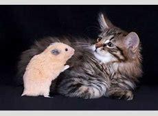 Lustige Katzen Bilder 6 kleine Pause Unterhaltung