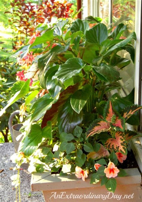 12 Beautiful Container Gardening Ideas For Shade An